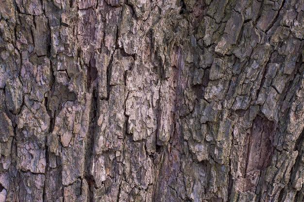 Motif de fond de texture vieux arbre bois