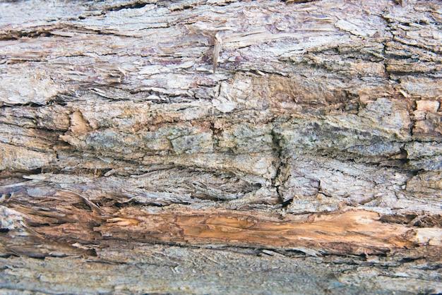 Motif de fond de texture vieux bois arbre