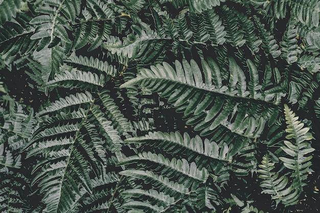 Motif de fougère naturel parfait. beau fond fait avec de jeunes feuilles de fougère verte.