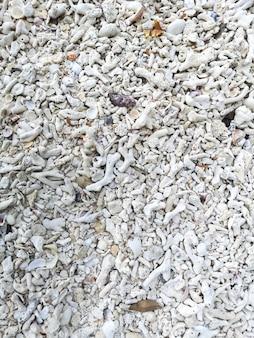 Motif de fragment de coraux sur la plage