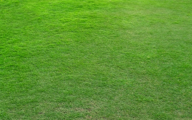 Motif d'herbe verte et texture pour le fond.