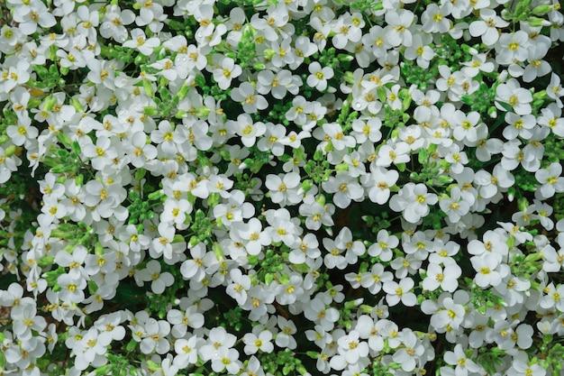 Motif naturel de petites fleurs blanches.
