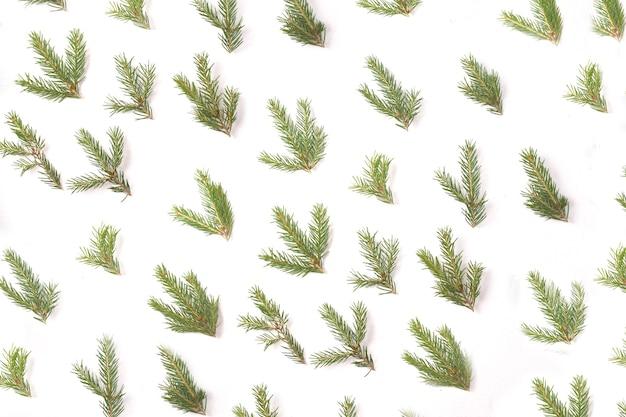 Motif de petites branches d'épinette sur fond blanc