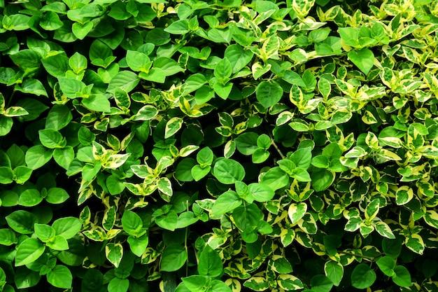 Motif de petites feuilles vertes et blanches dans la nature