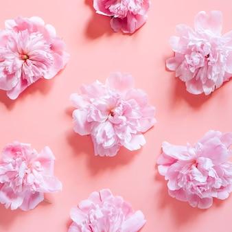 Motif répété de plusieurs fleurs de pivoine en pleine floraison de couleur rose pastel isolé sur fond rose pâle. à plat, vue de dessus. carré