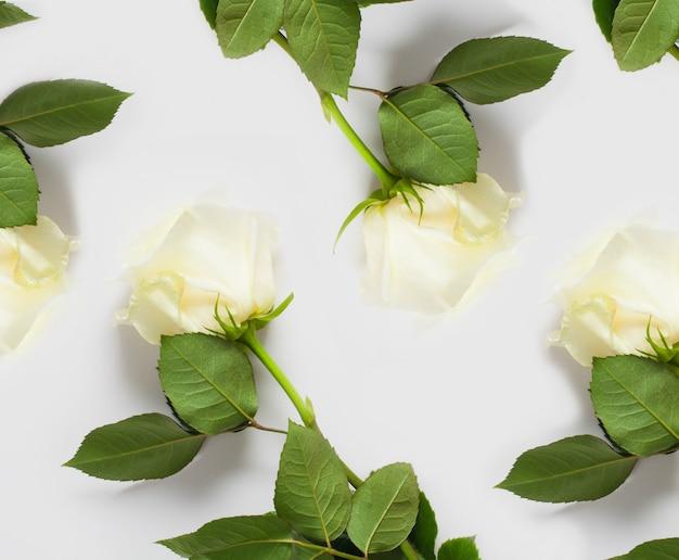 Motif de roses blanches sur un mur blanc. le concept de murs délicats avec des fleurs, des murs pour des magasins de fleurs, des textes de mariage, des sous-vêtements, des cartes et des parfums.