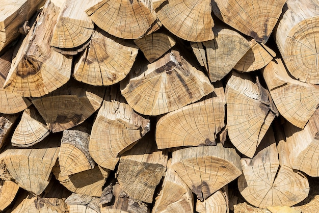Motif de la section en bois et texture