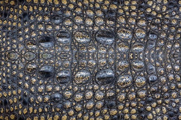 Motif de surface en peau de crocodile pour le fond.