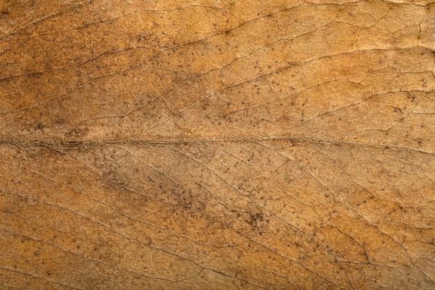Motif de texture de fond de feuille sèche et surface de feuille d'automne brune sèche avec macro botanique de veines ...