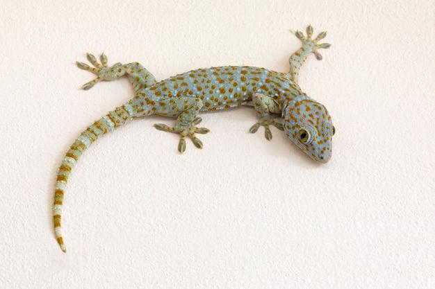 Motifs colorés de gecko sur mur de plâtre