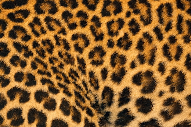 Motifs colorés et peau de léopard.