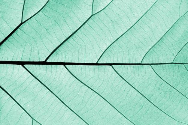 Motifs de feuilles bleues parfaites - gros plan