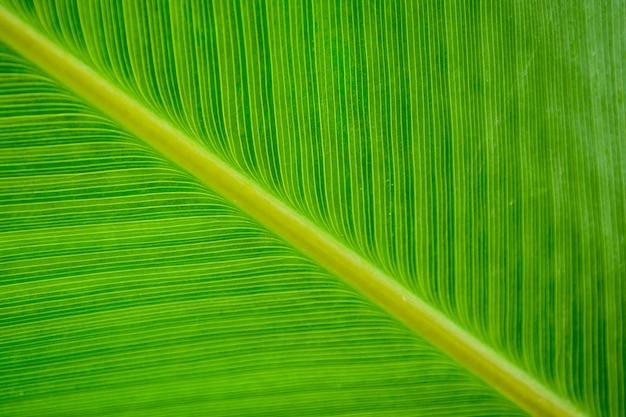 Motifs de feuilles vertes - gros plan