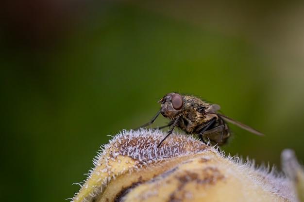Une mouche posée sur un tournesol dans le jardin