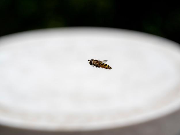 Mouche rayée en vol sur un arrière-plan flou clair