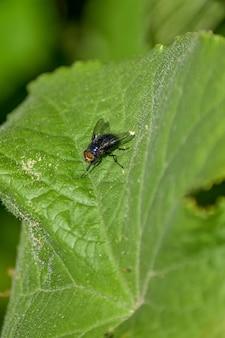 La mouche se repose sur une feuille d'une fleur