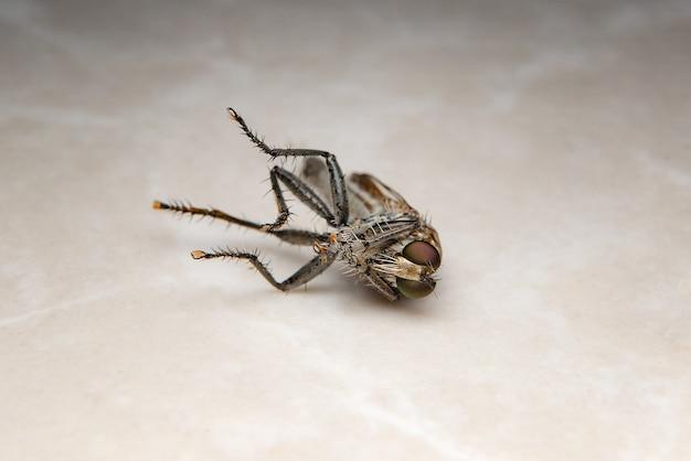 Les mouches mortes gisent sur le sol.