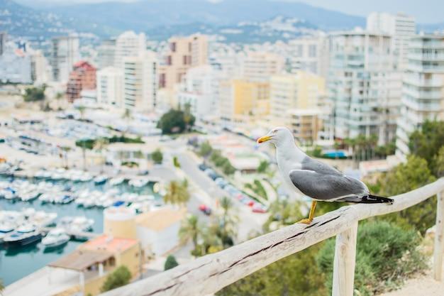 Mouette assise sur un poteau en bois, sur le fond de la belle ville de calpe sur la costa blanca, espagne.