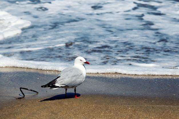 Mouette debout sur une plage de sable en nouvelle-zélande