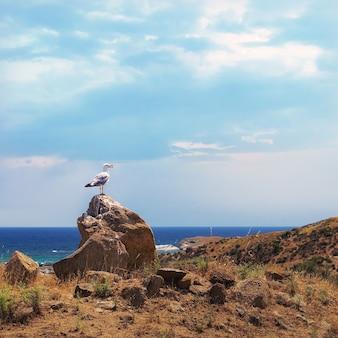 Mouette debout sur un rocher sur une colline au-dessus de la mer.