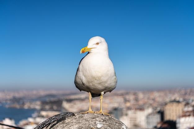 Mouette debout sur le toit de la ville