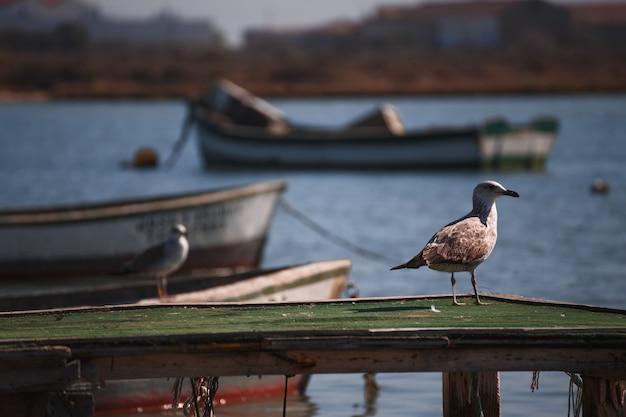 Mouette entre bateaux sur l'eau