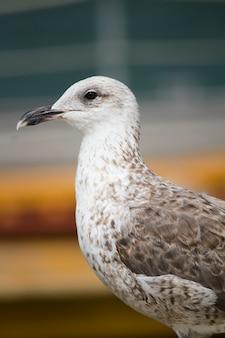 Mouette oiseau dans les quais de la ville