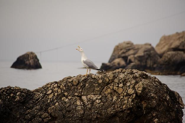Mouette sur un rocher au bord de la mer. crimée