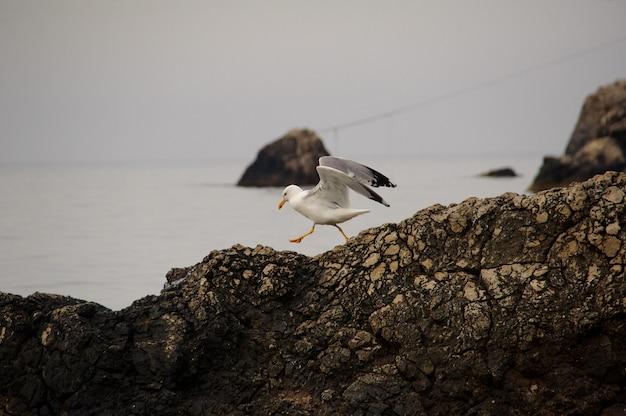Mouette sur un rocher au bord de la mer