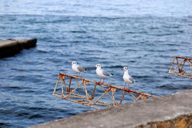 Mouette s'asseoir sur du béton près de la mer