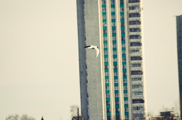 Mouette de la ville survolant la ville