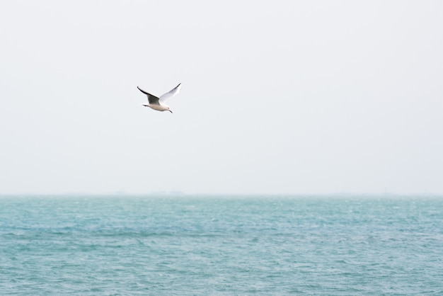 Mouette en vol au dessus de la mer