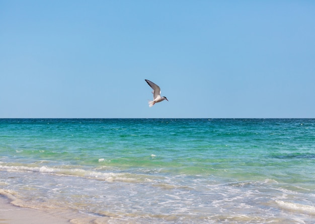 Mouette volant au-dessus de la mer