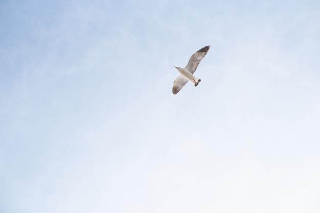 Mouette volant sur le ciel bleu