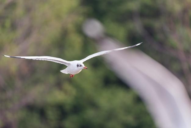 Mouette volant contre les arbres