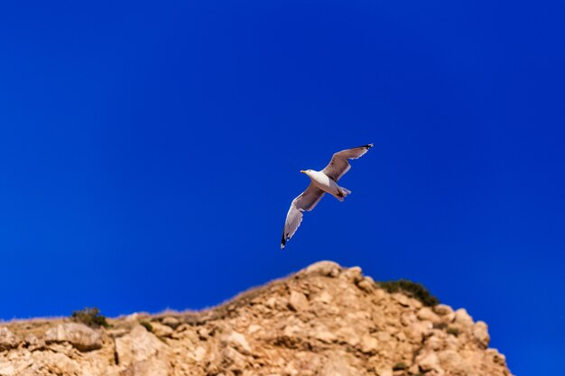 Mouette volant haut sur le vent mouette volante mouette volant sur un beau ciel bleu