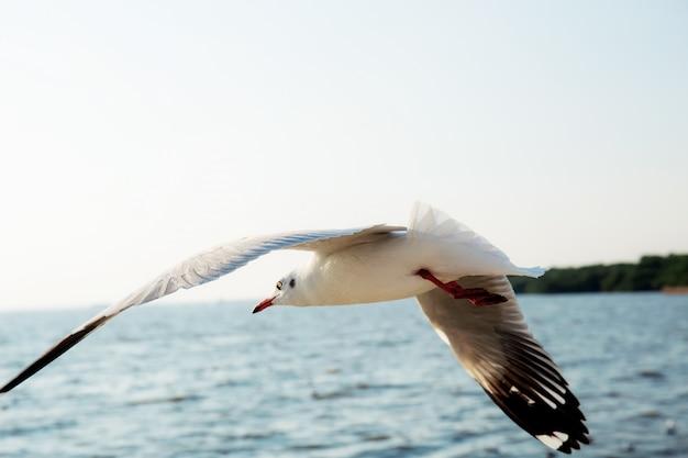 Mouette volant en mer.