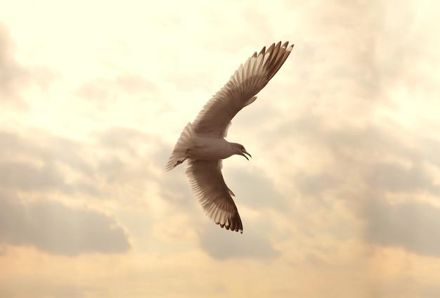 Mouette volante dans le ciel