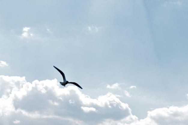 La mouette vole dans le ciel contre les nuages