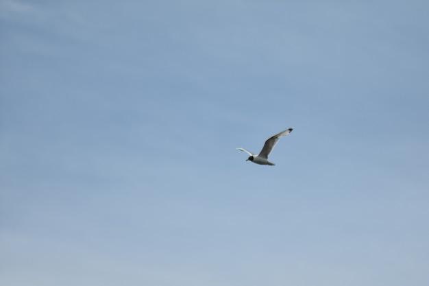 La mouette vole à travers le ciel bleu
