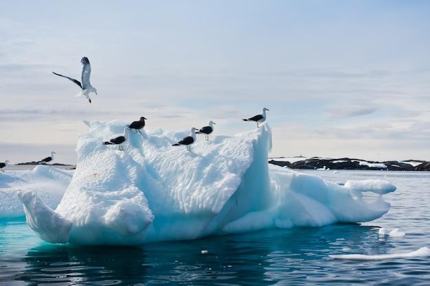 Mouettes en antarctique