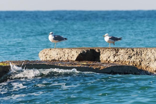 Mouettes sur un brise-lames en béton. mer bleue.