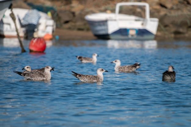 Mouettes nageant sur les quais