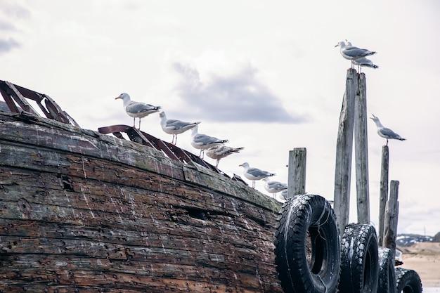Les mouettes ont choisi un vieux navire abandonné sur le rivage