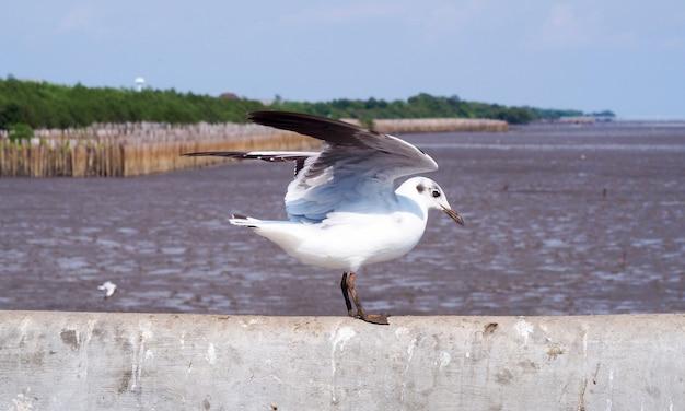 Les mouettes se tenaient et déployaient des ailes sur le bord du pont