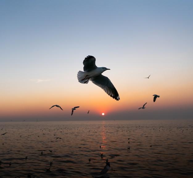 Mouettes survolant la mer au coucher du soleil