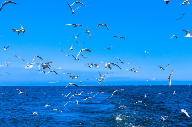 Mouettes volant après le bateau de vitesse dans le golfe de thaïlande