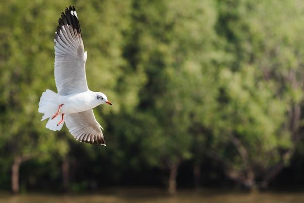 Mouettes volant contre les arbres