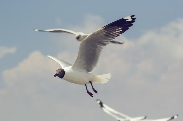 Mouettes volant haut avec des ailes larges vers la lumière contre un ciel bleu, concept inspirant de liberté et d'aspiration