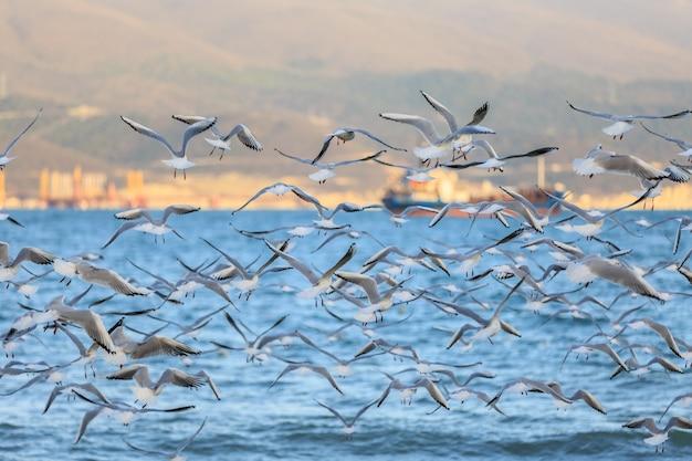 Mouettes volant sur le rivage de la baie